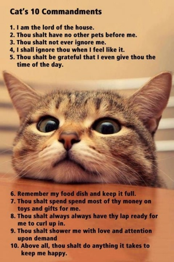 kitty commandments