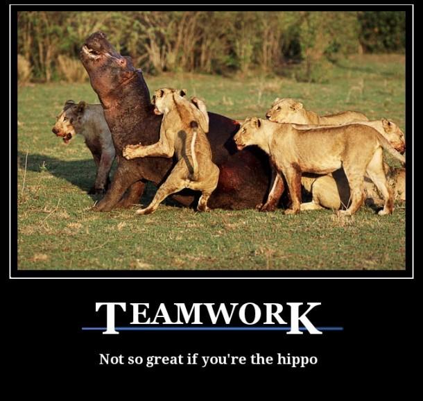 Teamwork Meme Guy