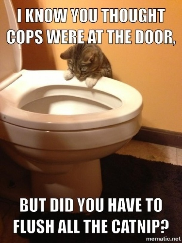 A Cat Staring Into A Toilet Bowl With Humorous Text Above