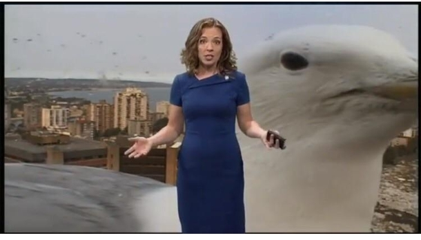 A seagull kinda ruined the weather report on this mornings news