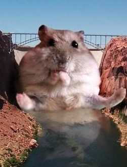 Accidentally googled Hamsterdam Was not disappointed