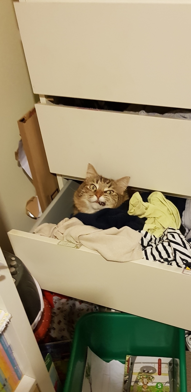 Angry drunk pirate cat hiding in my daughters drawer - Meme Guy