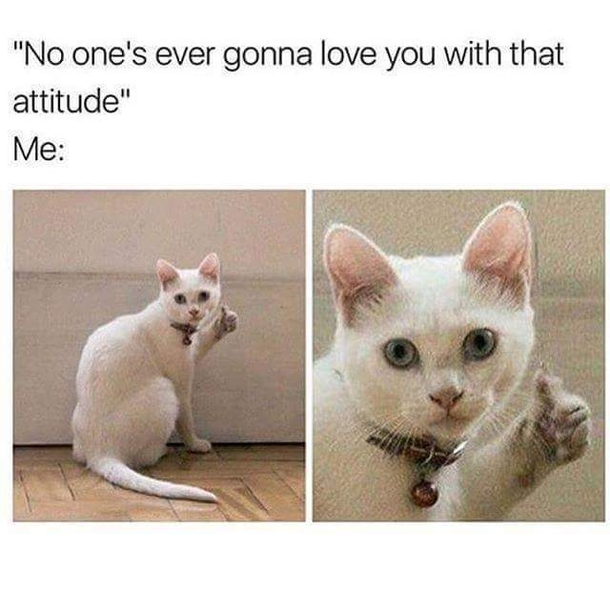 cats with attitude problems in relationship