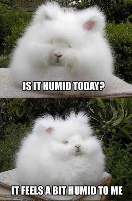 Bad Hair Day Meme Guy
