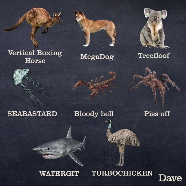 Funny Names For Animals Meme : Better names of animals in australia meme guy