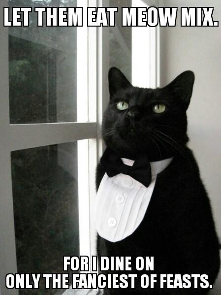 Bow Tie Cat Meme