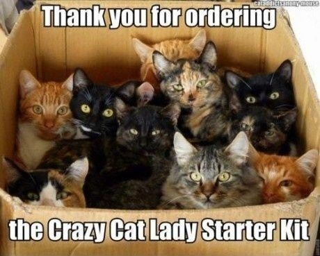 Animates Cat Starter Kit