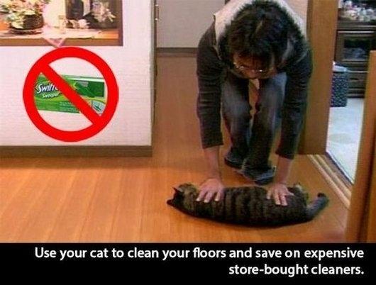 Funny Memes About Life Hacks : Cat lifehack meme guy