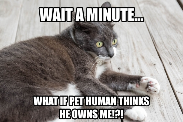 cat shower thoughts 216024 cat shower thoughts meme guy