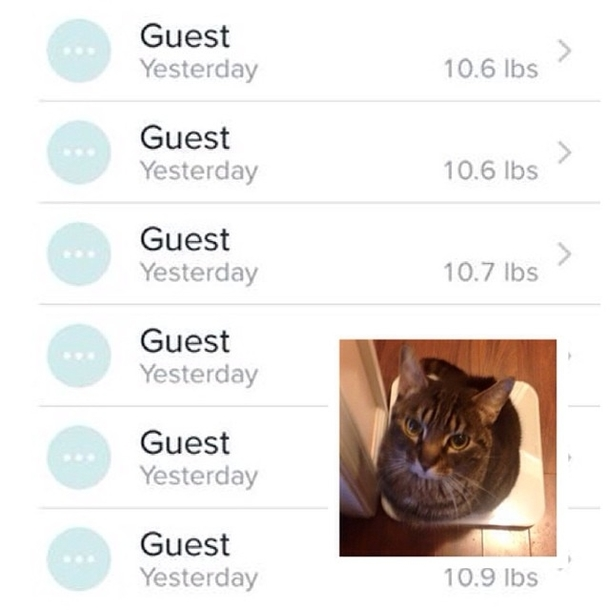 Cat weighs himself multiple times per day and fitbit records and logs it