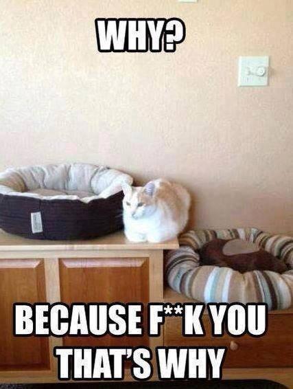 Funny Memes For Jerks : Cats are assholes meme guy
