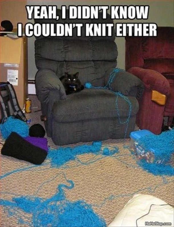 Knitting Club Meme : Cats attempt at knitting meme guy
