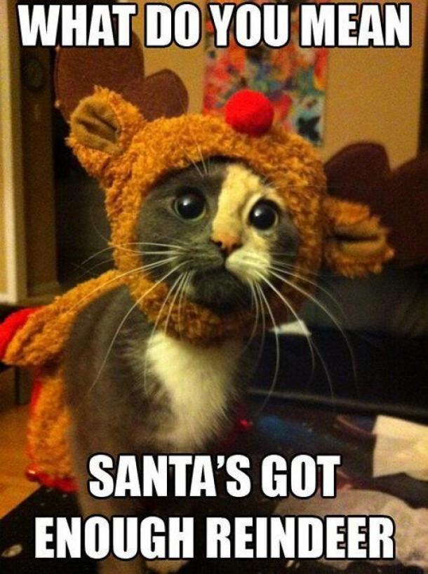 Christmas Kitty Is Sad Meme Guy