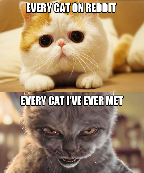 Cant Get A Girlfriend Cats