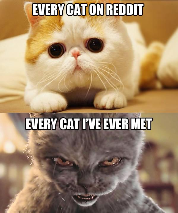 carry cat