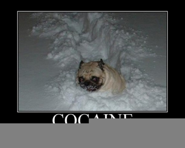 Cocaine its a helluva drug