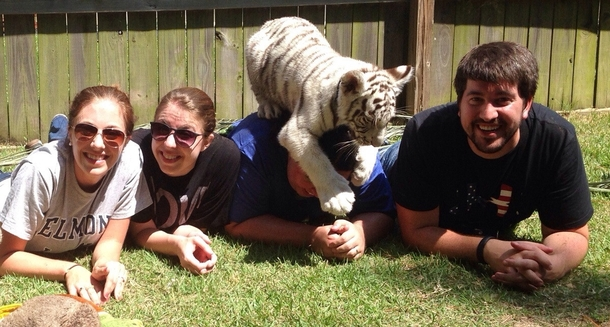 Come play with baby tigers they said It will be fun they said