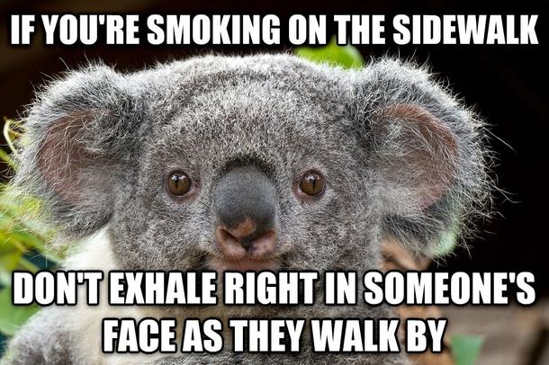 Common Courtesy Koala Meme Guy