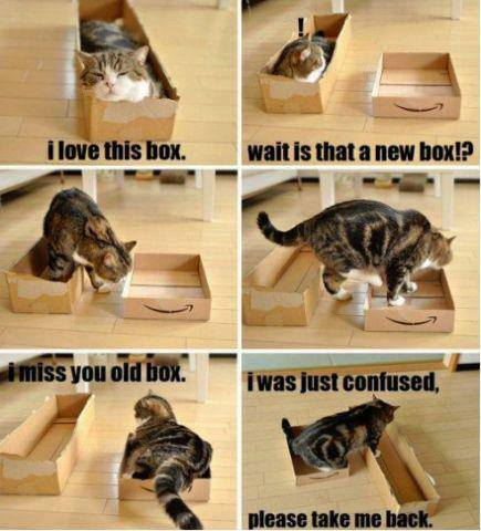 Confused Cat Meme Guy