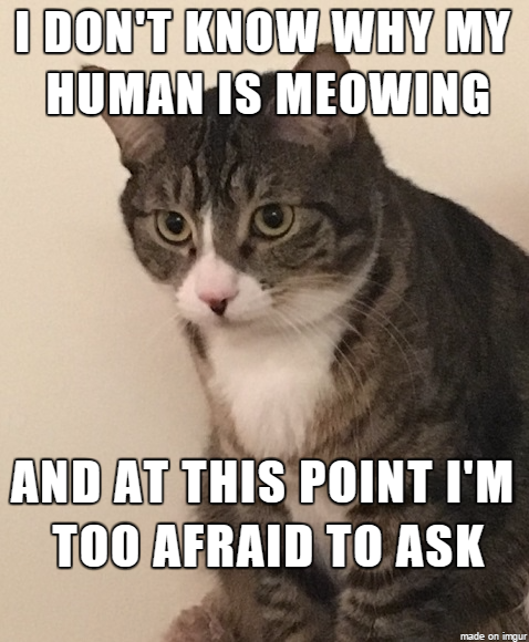 Confused Cat Meme Meme Guy