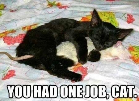 Confused Cat Or Revolutionary Cat Meme Guy
