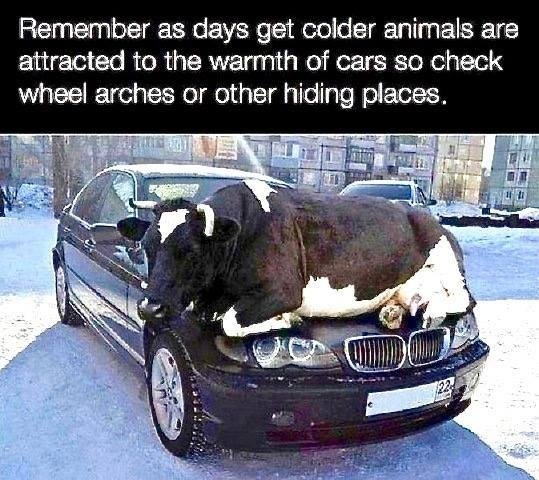 Crucial Advice This Winter
