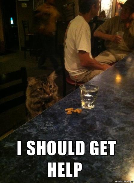 Funny Cat Drinking Meme : Drinking cat meme guy