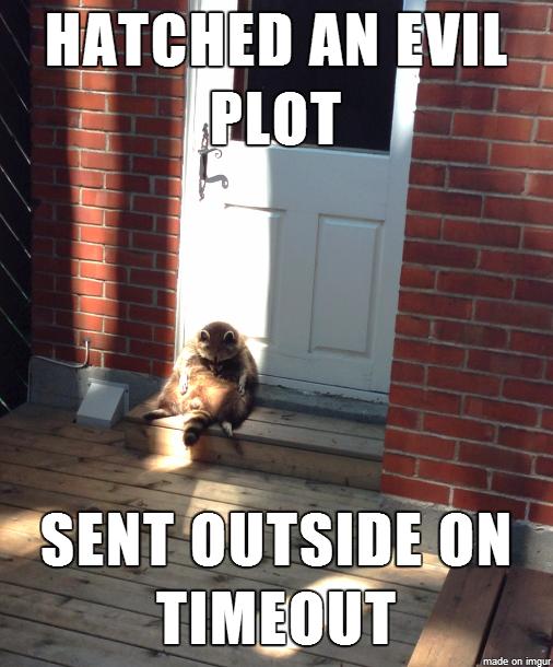 evil plot raccoon gets his comeuppance 24570 evil plot raccoon gets his comeuppance meme guy