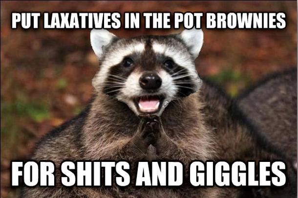 Pun raccoon meme