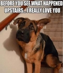 Exactly what my dog was like before I found the explosive diarrhea in my room