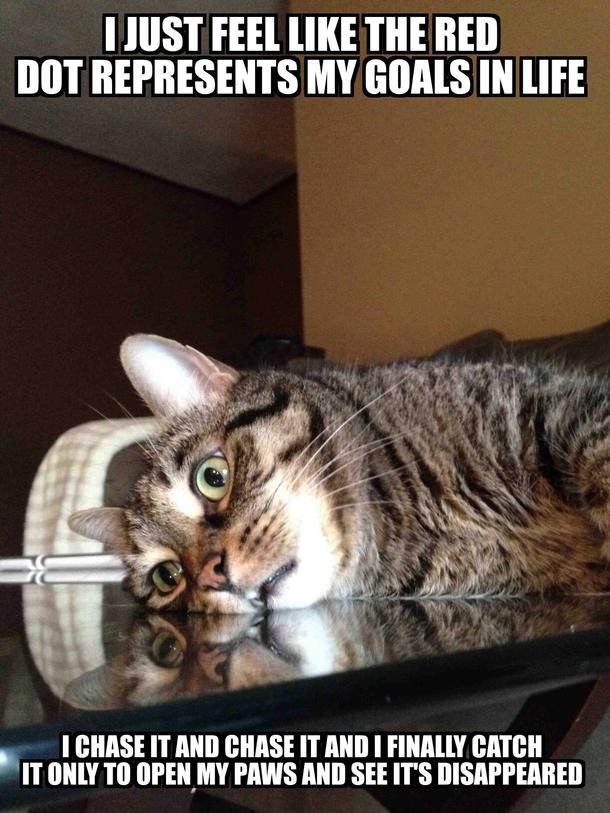 Existential Cat Video