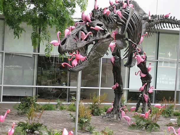 Fact A flock of flamingos can pick a T-Rex clean in mere minutes