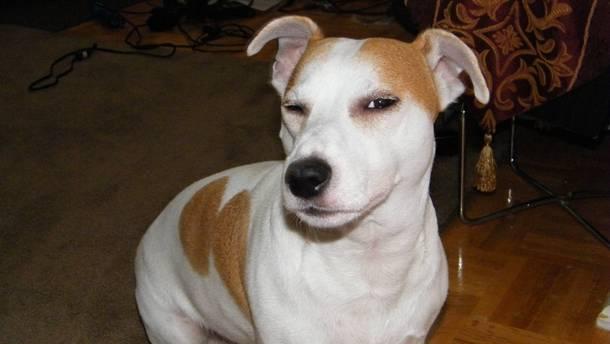 for-my-cakeday-i-present-my-skeptical-dog-62998.jpg