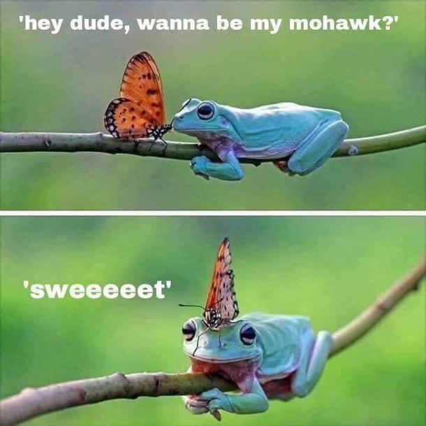 Frog hat - Meme Guy