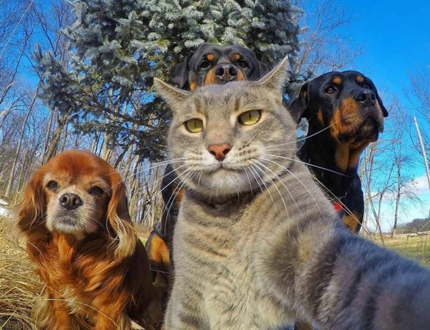 Funny cat selfie with friends