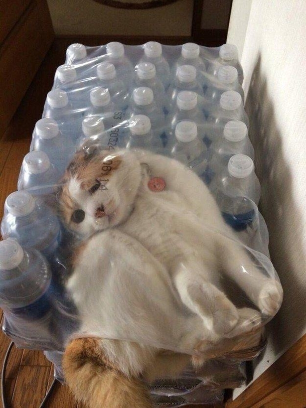 Further proof that cats are liquid