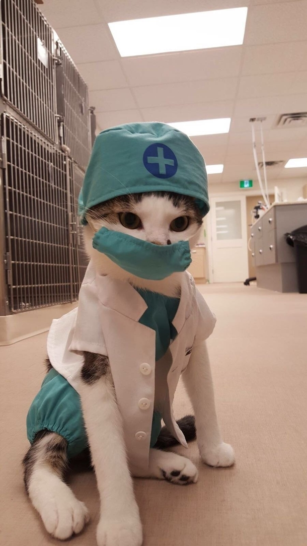 get ready for the cat scan 241896 get ready for the cat scan meme guy