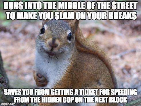 good-guy-squirrel-145445.jpg