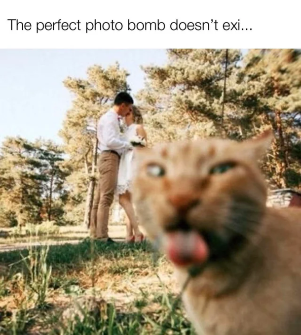 Great photo of the cat