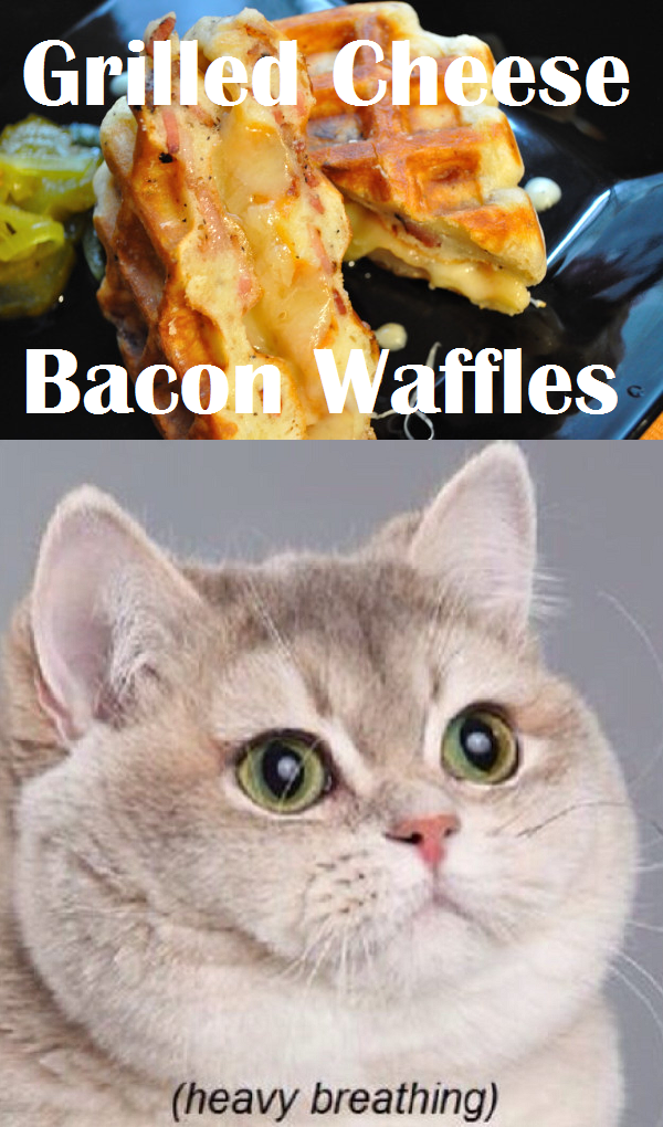 Can Cats Eat Bacon Fat