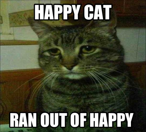 happy cat not so happy 7231 happy cat not so happy meme guy