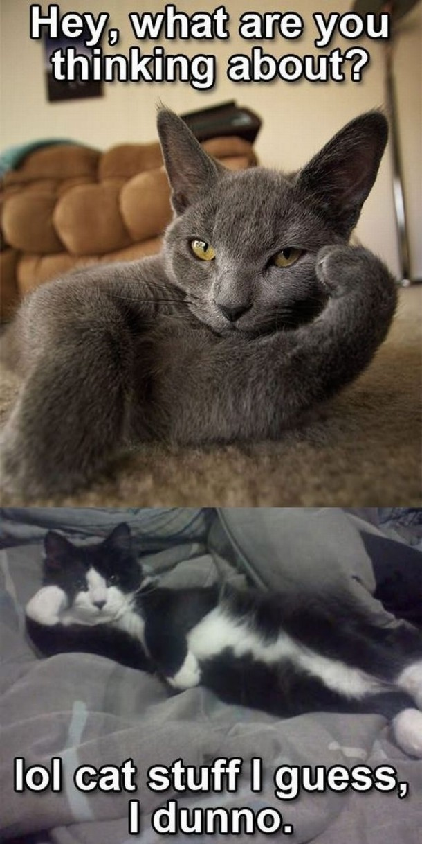 my kitten scratches furniture