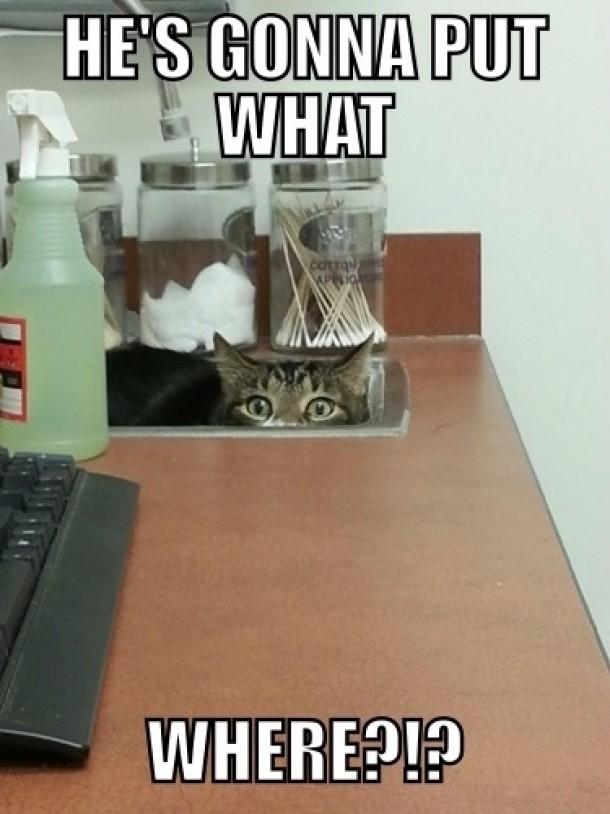 Image result for vet memes cats