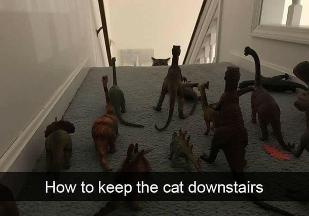 How to keep the cats downstairs