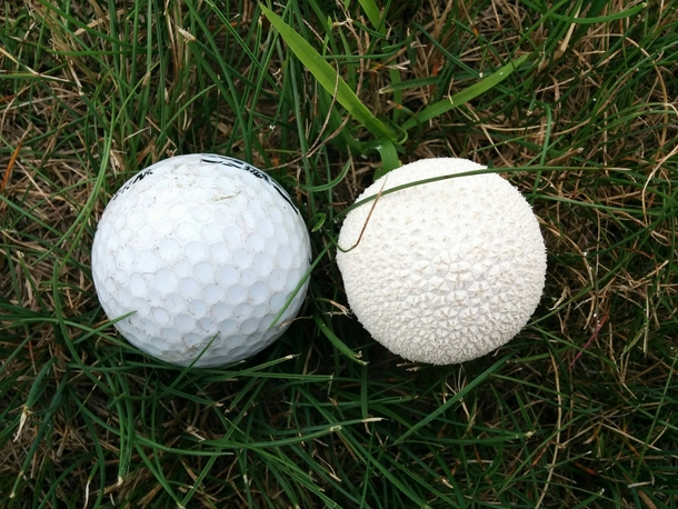 I also work at a golf course where the mushrooms act like golf balls