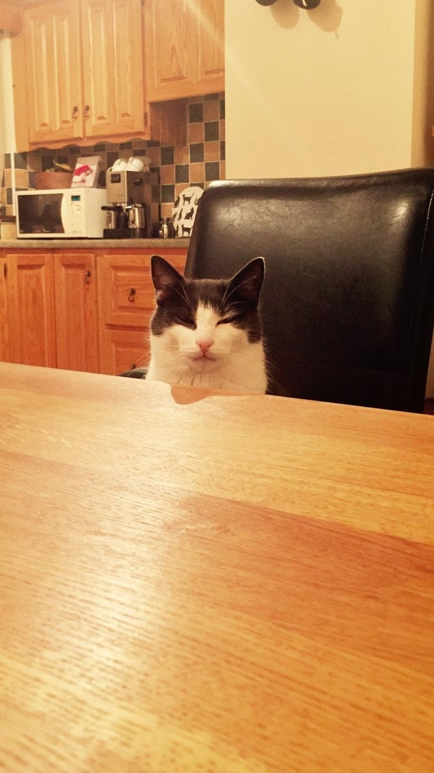 I kicked over my cats milk and had no replacement He sat opposite me as I ate my dinner looking at me like this