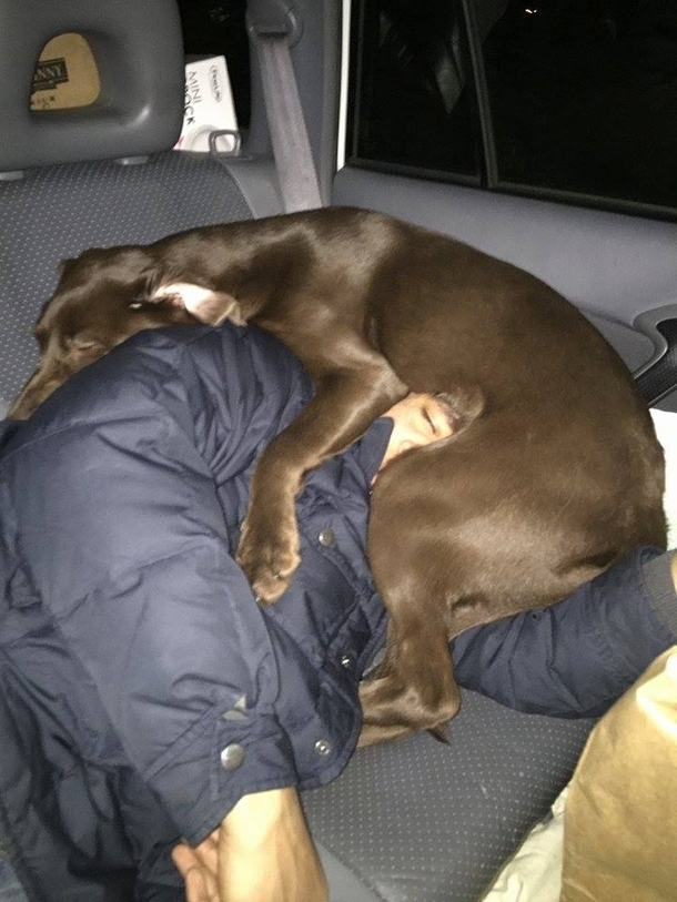 I pushed my dog out of the seat so I could sleep during a road-trip my wife took this picture while I slept
