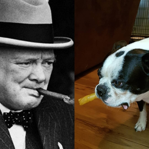 I swear to God my sisters dog is the reincarnation of Winston Churchill