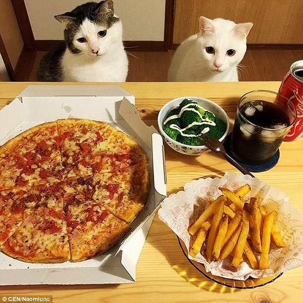 I want someone to look at me the way these cats look at food ...