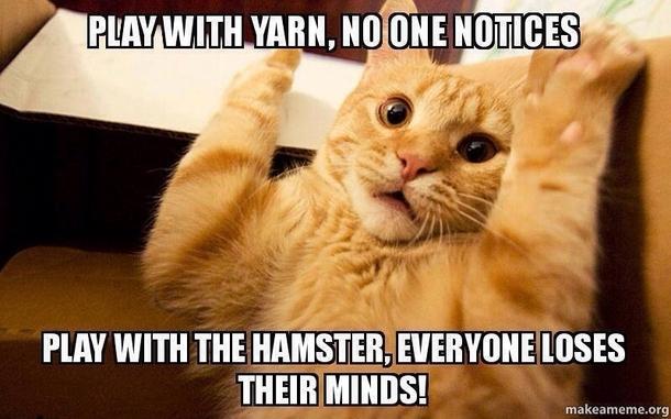 joker cat 97105 when someone tickles my neck meme guy
